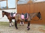 BR / HHS / Old Pink-Black
