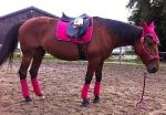Equiva / 4Horses / Talent Pink-Lila