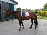 Equiva / 4Horses Riders Club Beige-Rosa