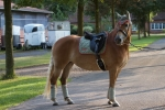Equiva / 4Horses / Talent Taupe-Pink