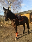 Harry's Horse / Elite-R Schwarz-Orange