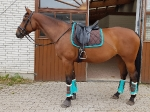 Harry's Horse / Flextrainer Türkis