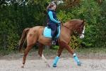 Harry's Horse / Crystal Aqua