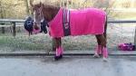 Harry's Horse / Paradedecke SU 14 Pink