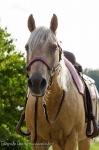 Harry's Horse / Crystal Dark Brown