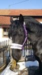 Harry's Horse / Lyrics Lila
