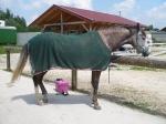 Horseware / Fly Rug Net Cooler Grün