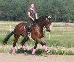 HV Polo / De Luxe Darkbrown-Azalea