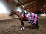 HV Polo / Favouritas Pink