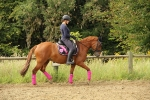 Loesdau / Black-Forest Exquisite Schwarz-Pink