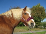 Loesdau / I love my horse Bordeaux