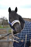 Horse Friends / Softdream Royalblue