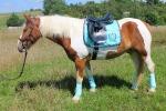Horse-friends / Manhatten Mint