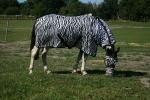 Horse-friends / Wildlife II Schwarz-Weiß