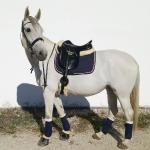Horse-friends / Basic Marine