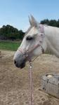 Horse-friends / Xalapa Rosé