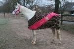 Loesdau / Horse Rider