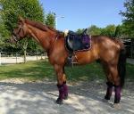 Ponyschwester / Bambus + Satin Glitter Schwarz-Purple