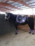 Ponyschwester / Holo Heart Lila