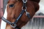 Equine Concept / Lederhalfter Vienna Schwarz