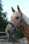 Horseware / Amigo