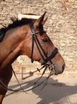 Velicea Saddles