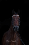 Equine Concept / Stirnriemen Shades of Black