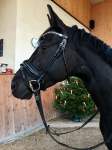 Dyon / Dressage Collection Schwarz