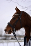 Equine Concept / Trense Vienna Schwarz