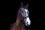 Equine Concept / Vienna