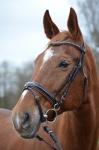 Happy Horse Shop / Colour