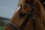 Happy Horse Shop / Crystal II