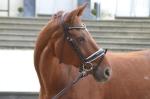 Harry's Horse / Classic Braun