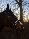 Harry's Horse / Chiccque