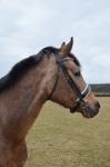 Harrys Horse / Chique
