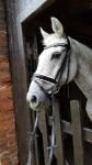 Harry's Horse / Chique