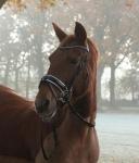 Harry's Horse / Chique Schwarz