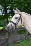 Harry's Horse / Lack