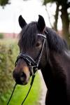 Harry's Horse / Luxe