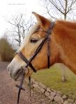 Harry's Horse / Luxe Dunkelbraun