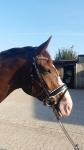 Harry's Horse / Stardust Schwarz