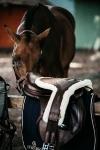 KENTUCKY Horsewear / Sheepskin Stud Girth Special Brown