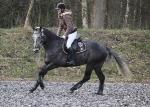 HV Polo / Leonardo Black-Dark Brown