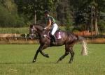 HV Polo / Leonardo Dahlia-Birch